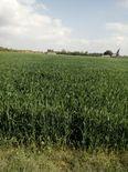 أرض زراعية لقطة للبيع بمركز بدر بالبحيرة 1