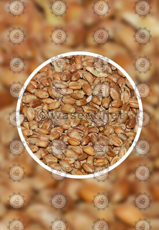 للبيع أفضل وأجود أنواع القمح