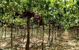 اراضي زراعية لللبيع