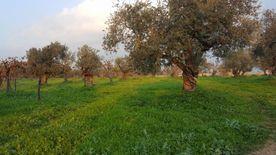 اراضي زراعية للبيع في علما زغرتا