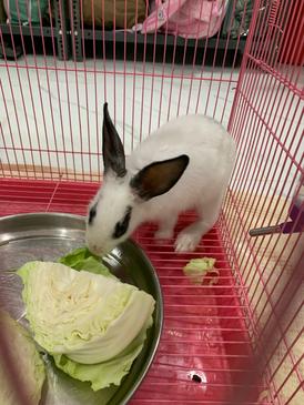 ارانب العمر 5شهور نظيفه مع القفص