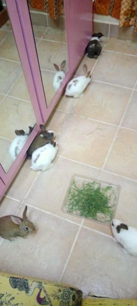 ارانب صغيرة للبيع