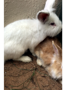 Strong rabbits for sale 5