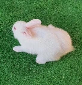 ارانب هاي بلاس للبيع
