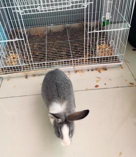 ارنبين للبيع مع القفص