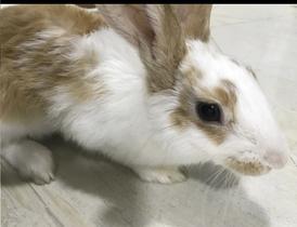 ارنب انثى للبيع
