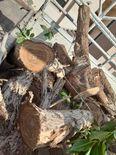 ازالة الاشجار وتقطيعها 1