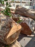 ازالة الاشجار وتقطيعها 2