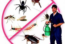 التخلص من جميع الحشرات