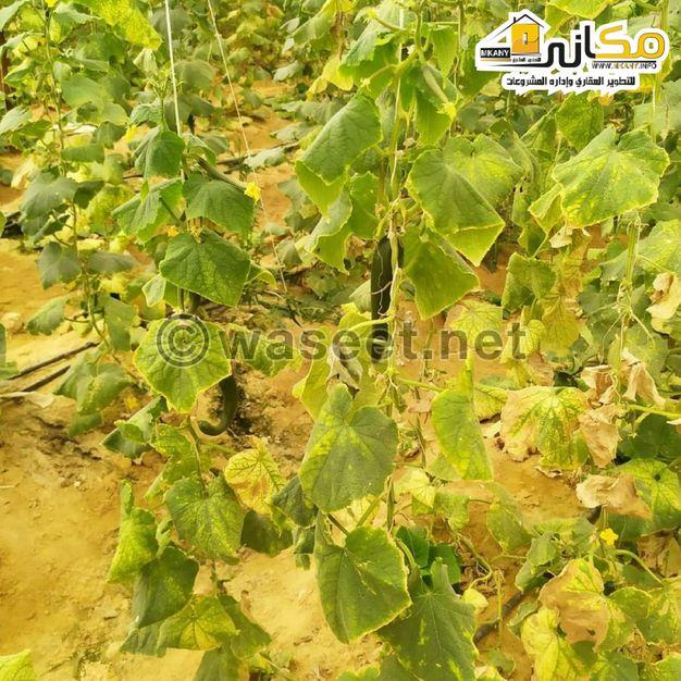 ارض زراعية للبيع بالجيزة شارع الهرم