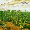 ارض زراعية للبيع بالجيزة شارع الهرم 1
