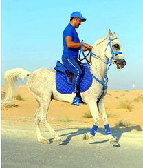 الحصان خصي للبيع