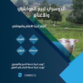 Al Dosari Livestock