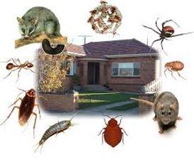 الهلال.لمكافحة وإبادة الحشرات