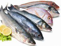 Sale of fresh fish wholesale