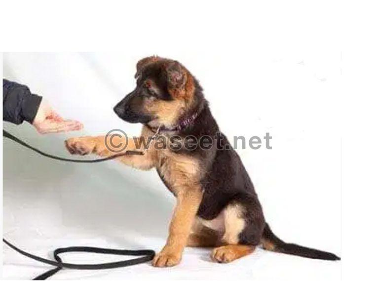 تدريب كلاب 0