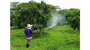تنسيق وزراعة جميع الاشجار