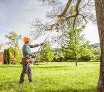 تنظيف النخيل وازالة الاشجار الضارة بالبيوت