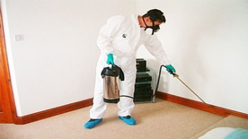 Cleaning Sofa, Carpets and Pest Control