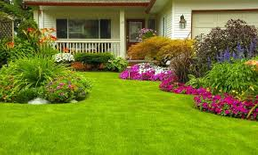 جولدن فيجن لتنسيق وتجميل الحدائق