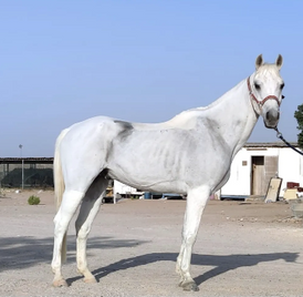 Horse capacity for sale