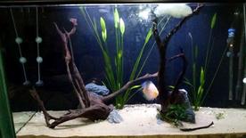 حوض اسماك فاخر مع 5 انواع اسماك للبيع