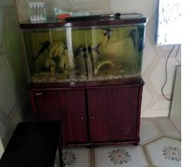 حوض سمك للبيع 4