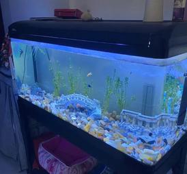 حوض سمك مع اسماك 12
