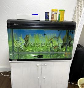 For sale parrot fish with a large aquarium