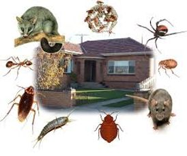 خدمات الريادة للقضاء علي الحشرات