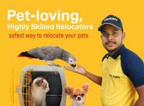 خدمات توصيل الحيوانات