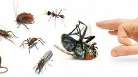 خدمات مكافحة الحشرات(القمة)