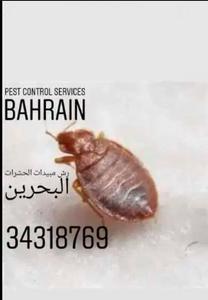 رش مبيدات الحشرات البحرين