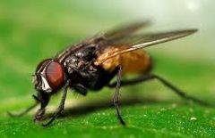 رش مبيدات مكافحة الحشرات