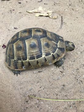 wild turtle for sale