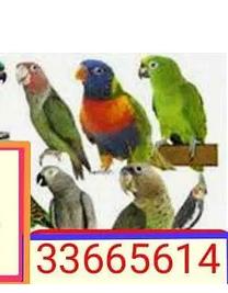 شراء الطيور او ترتيبهم