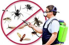 شركة العنايه المتميزة لمكافحة الحشرات