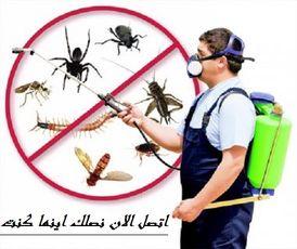 شركة المبدع لمكافحة الحشرات