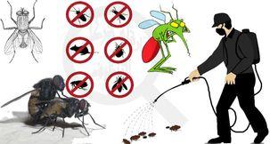 شركة مكافحة الحشرات خصم 25 ٪