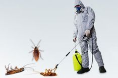 Pest Control Company in Sharjah