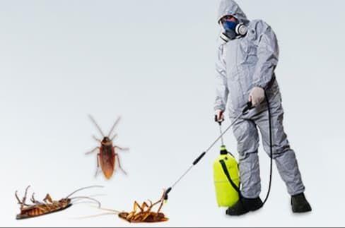 شركة مكافحة الحشرات في الشارقة