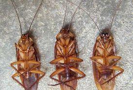 شركة مكافحة الحشرات ولتنظيف المباني