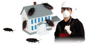 شركة مكافحة حشرات بالمدينةالمنورة...