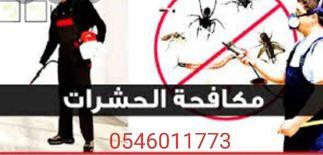 شركة مكافحة حشرات بالمدينة المنورة...
