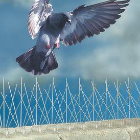 طارد الحمام والطيور والتخلص منها نهائي