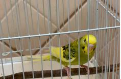 طير حب اللون : نفس ما هو موضح في الصورة