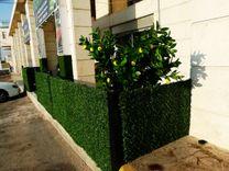 Wall grass for gardens