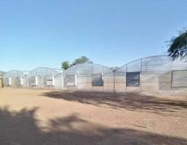 عشرة بيوت بلاستيكية استعمال استخدمت دورة زراعية