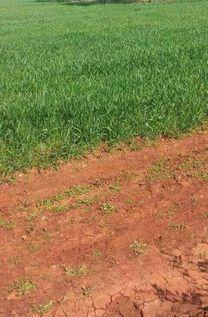 ارض للبيع تصلح للزراعة و للصناعة