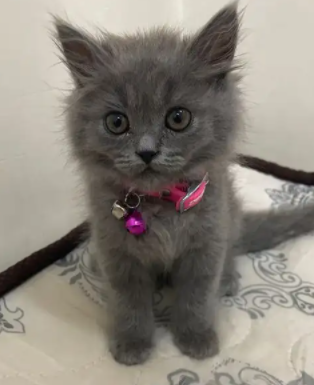 قطة لطيفة للبيع 9